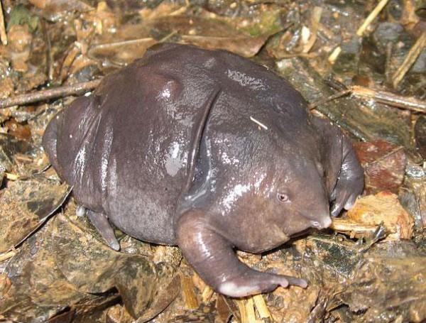 20種讓你覺得世界很奇怪的罕見動物15