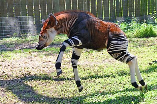 20種讓你覺得世界很奇怪的罕見動物17-1