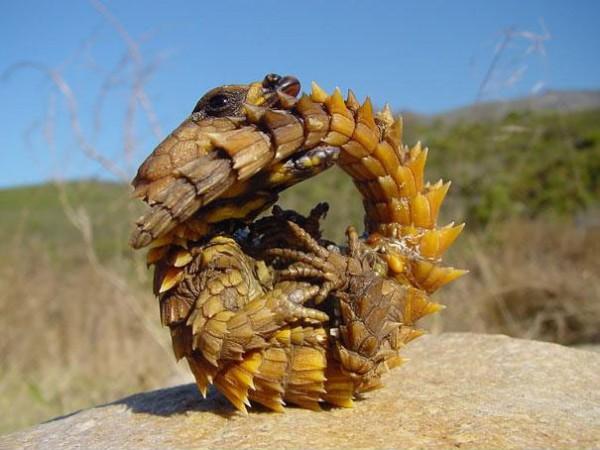 20種讓你覺得世界很奇怪的罕見動物19