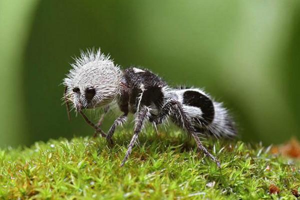 20種讓你覺得世界很奇怪的罕見動物3