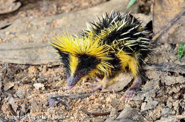 20種讓你覺得世界很奇怪的罕見動物5