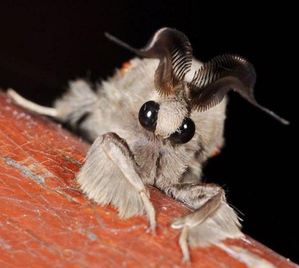 20種讓你覺得世界很奇怪的罕見動物9