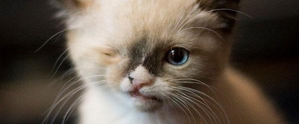 惹人憐愛的煞氣a海盜貓!0