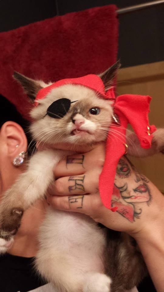 惹人憐愛的煞氣a海盜貓!10