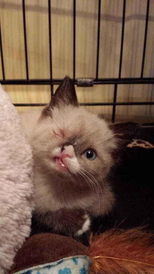 惹人憐愛的煞氣a海盜貓!13
