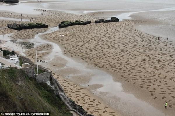 重演諾曼第登陸!9000沙人終被海水吞沒3