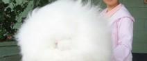 世界上最毛茸茸的兔子根本是顆大毛球