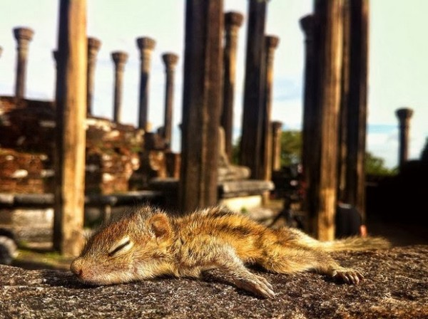 在各種奇怪地方睡著的花栗鼠寶寶12