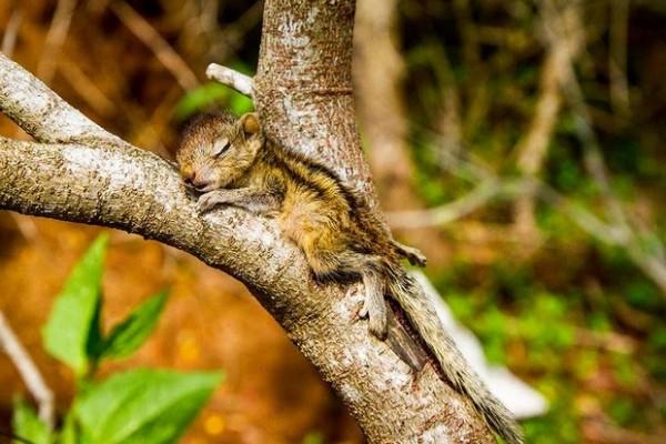 在各種奇怪地方睡著的花栗鼠寶寶14