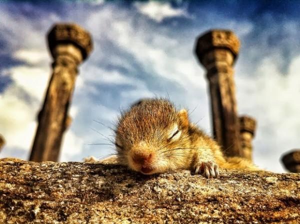 在各種奇怪地方睡著的花栗鼠寶寶2