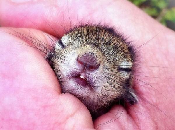 在各種奇怪地方睡著的花栗鼠寶寶7