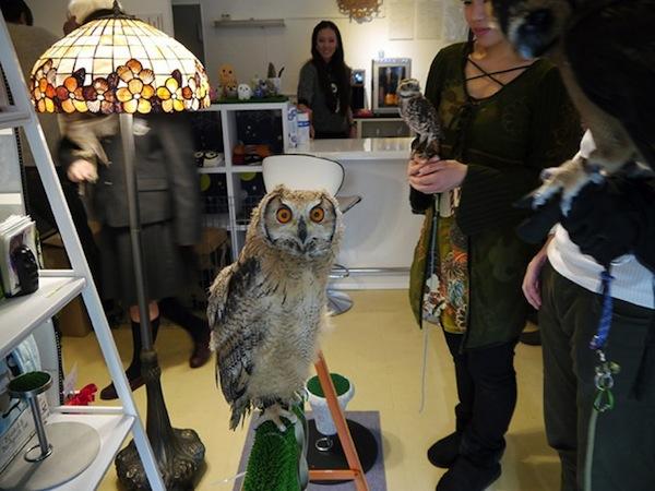 日本興起貓頭鷹咖啡店...是真的貓頭鷹!10