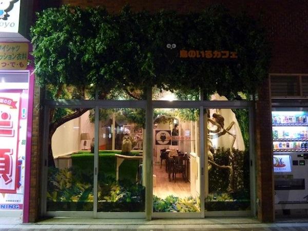 日本興起貓頭鷹咖啡店...是真的貓頭鷹!2