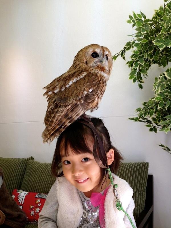 日本興起貓頭鷹咖啡店...是真的貓頭鷹!6