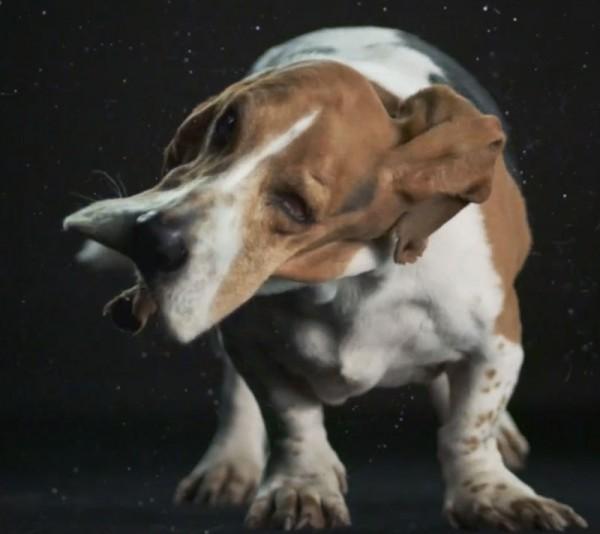 狗在甩頭時,會變成外星生物13