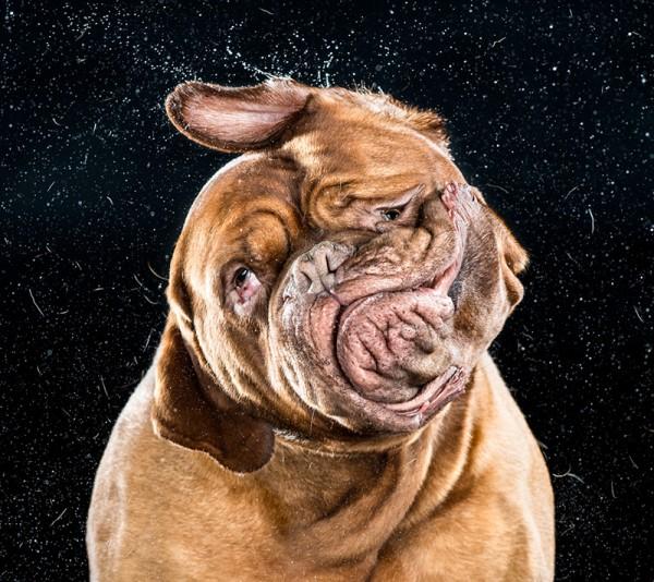 狗在甩頭時,會變成外星生物2