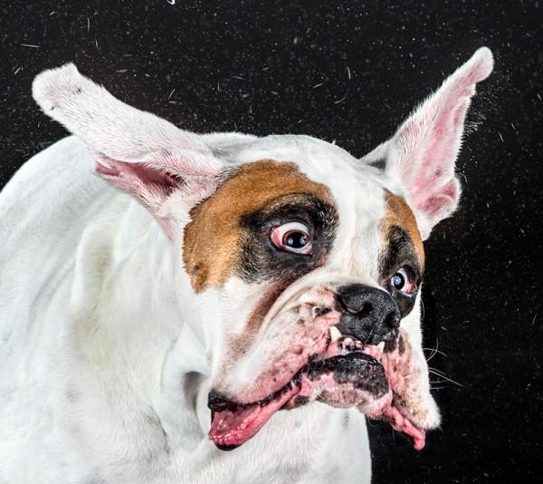 狗在甩頭時,會變成外星生物4