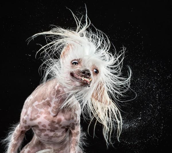 狗在甩頭時,會變成外星生物6