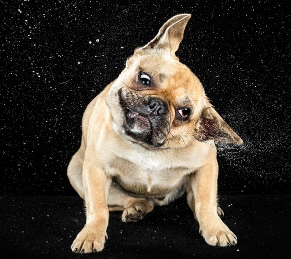 狗在甩頭時,會變成外星生物7