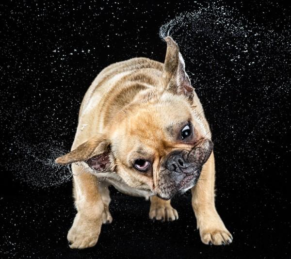 狗在甩頭時,會變成外星生物8