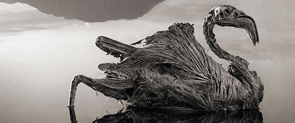 非洲的恐怖湖泊會把動物鈣化變雕像