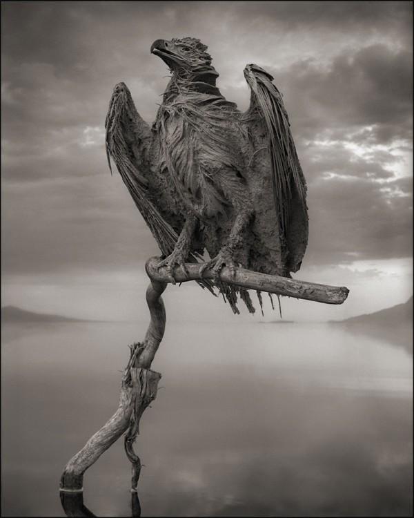 非洲的恐怖湖泊會把動物鈣化變雕像1