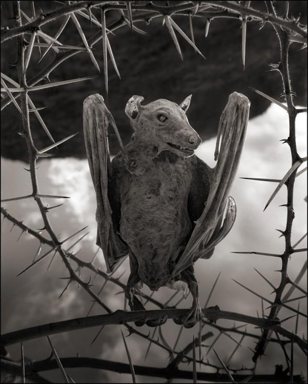 非洲的恐怖湖泊會把動物鈣化變雕像2