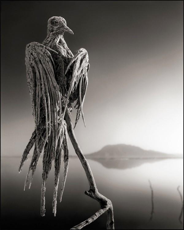 非洲的恐怖湖泊會把動物鈣化變雕像3