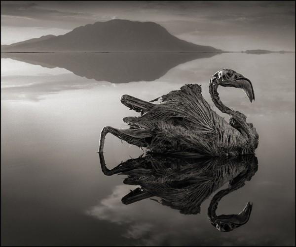 非洲的恐怖湖泊會把動物鈣化變雕像4