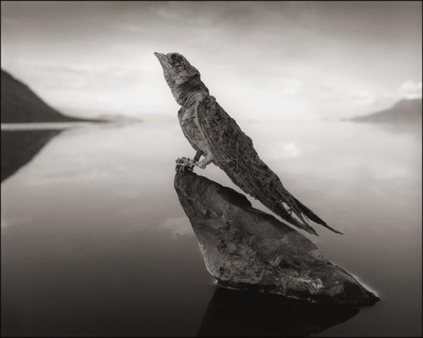 非洲的恐怖湖泊會把動物鈣化變雕像5