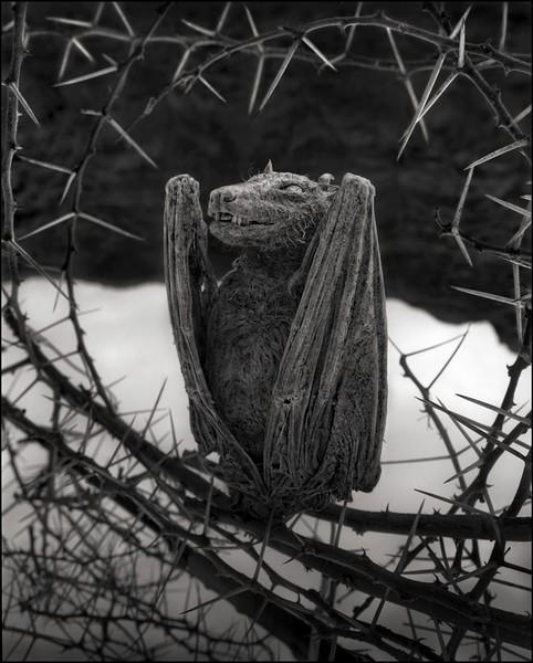 非洲的恐怖湖泊會把動物鈣化變雕像6