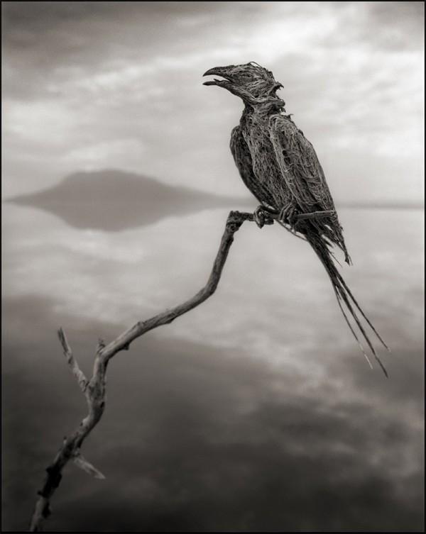 非洲的恐怖湖泊會把動物鈣化變雕像7