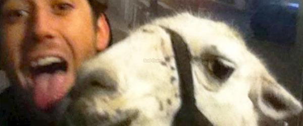喝醉青少年偷了一隻駱馬...還去搭公車
