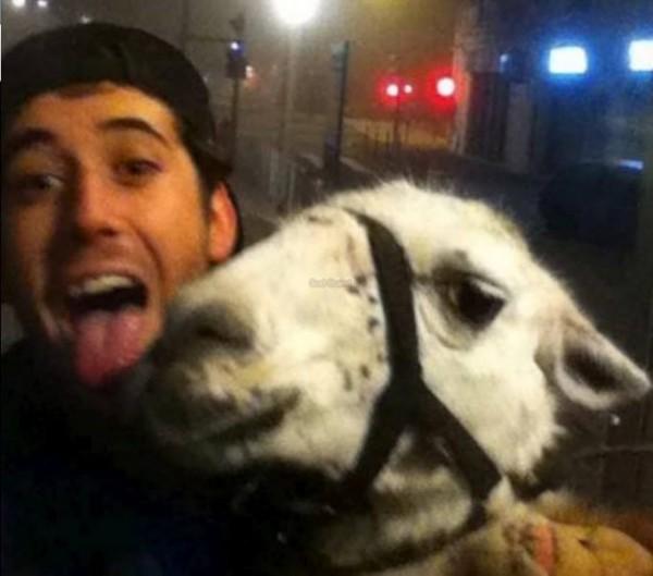 喝醉青少年偷了一隻駱馬...還去搭公車2