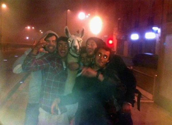 喝醉青少年偷了一隻駱馬...還去搭地鐵1