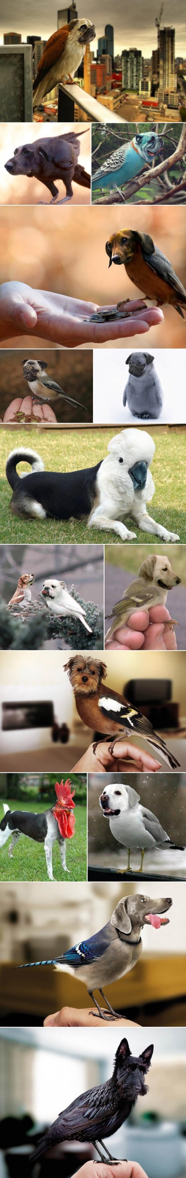 好像很說得過去的狗頭鳥1
