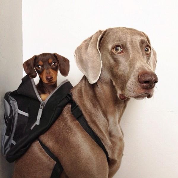 感情好到不行的大狗與小小狗1