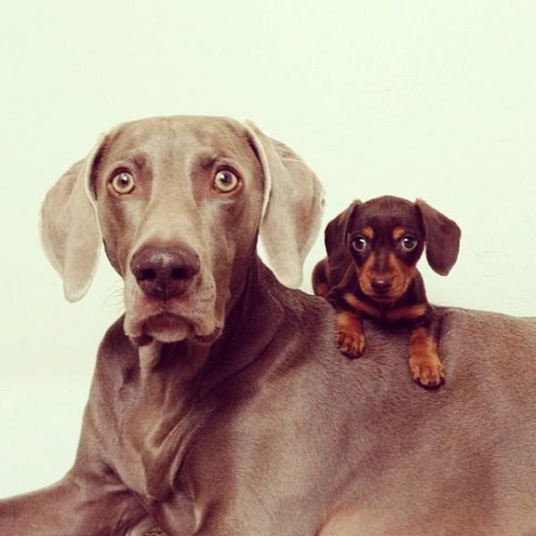 感情好到不行的大狗與小小狗11