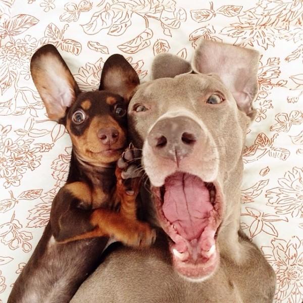 感情好到不行的大狗與小小狗2
