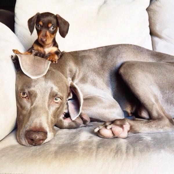 感情好到不行的大狗與小小狗3