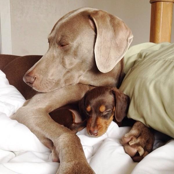 感情好到不行的大狗與小小狗6
