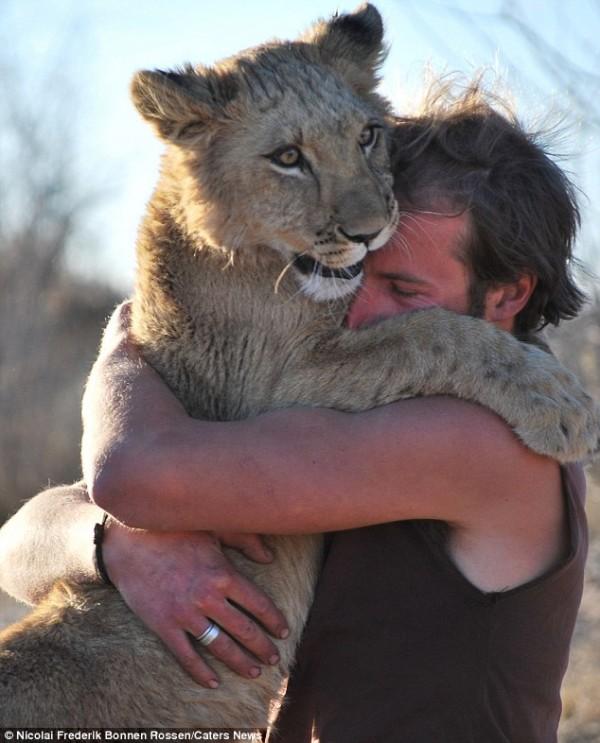 獅子跟人擁抱,擁抱動機是最美的部分...3