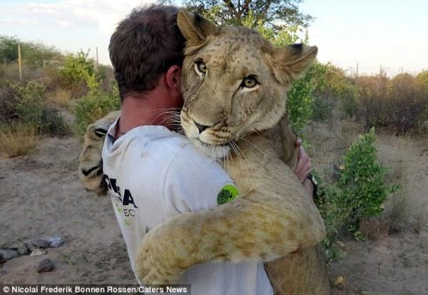 獅子跟人擁抱,擁抱動機是最美的部分...4