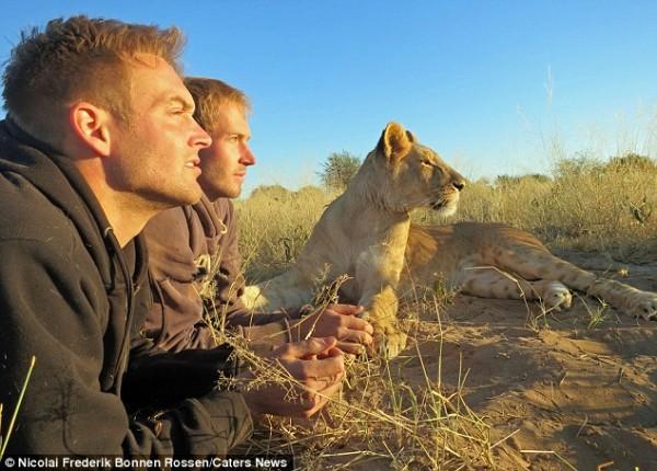 獅子跟人擁抱,擁抱動機是最美的部分...6