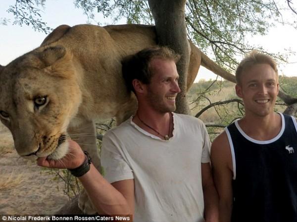 獅子跟人擁抱,擁抱動機是最美的部分...9