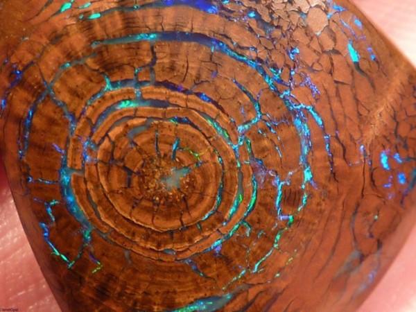 看起來像是發光木頭的神秘蛋白石4