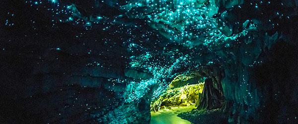 紐西蘭的螢火蟲寶寶讓整個洞穴看起來像銀河!