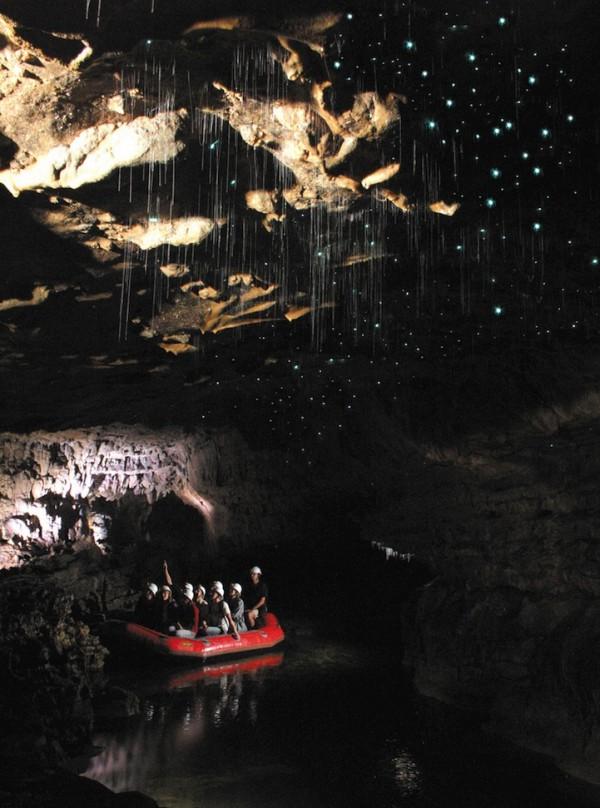 紐西蘭的螢火蟲寶寶讓整個洞穴看起來像銀河!6