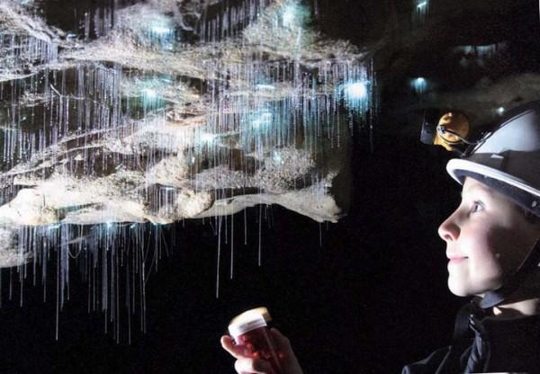 紐西蘭的螢火蟲寶寶讓整個洞穴看起來像銀河!7