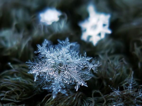 雪花上的花紋,一生至少要微距看過一次14